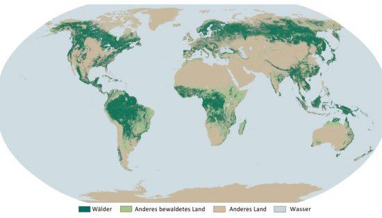 Wissenswertes über Bäume und Wälder