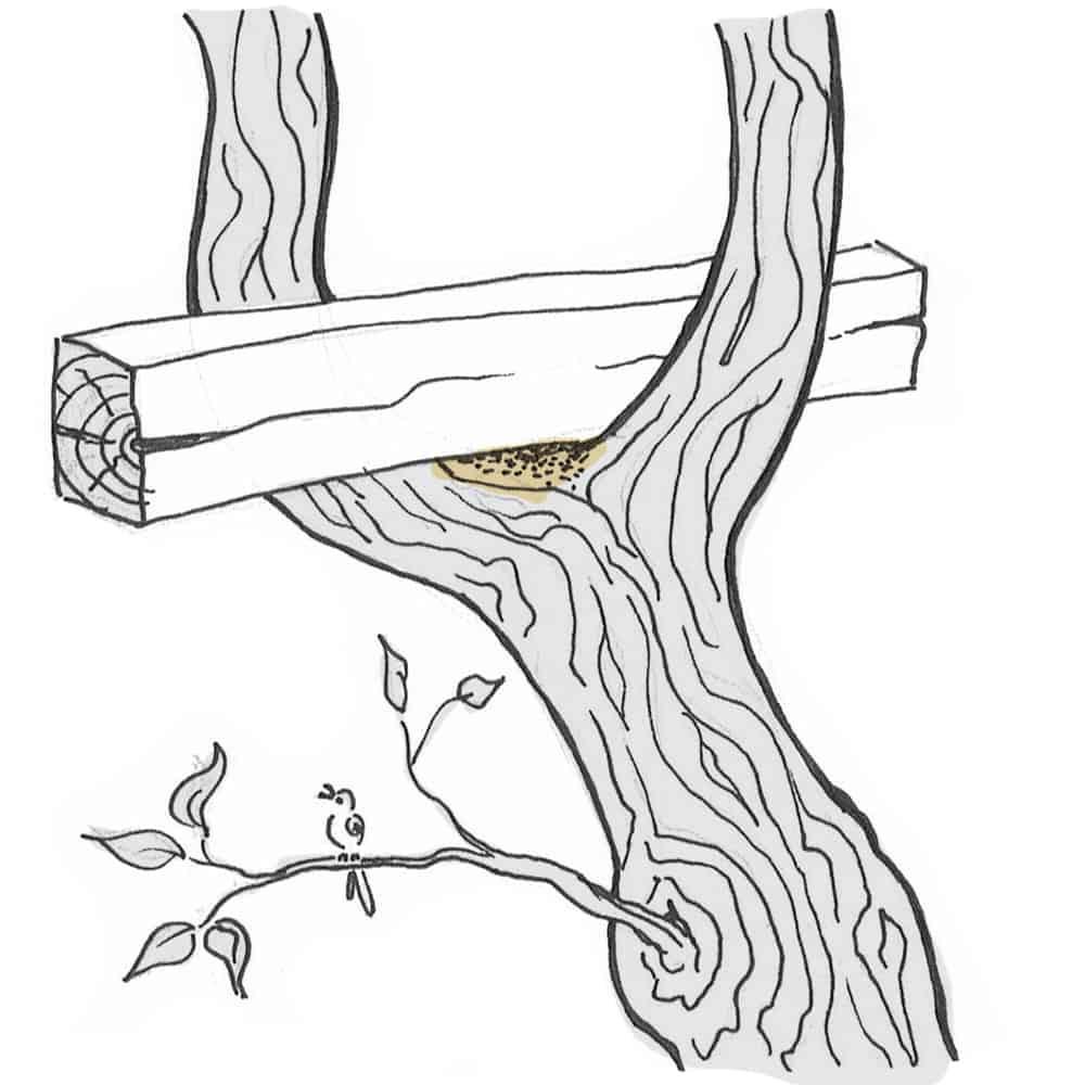 Wie befestige ich eine Schaukel im Baum