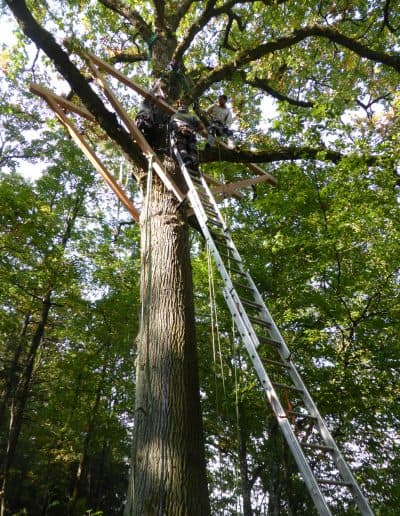 baumbaron baumhaus bauen treehouse building international (32)