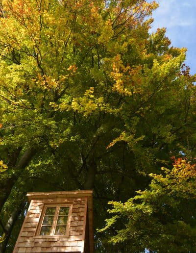 baumbaron baumhaus bauen treehouse building international (9)