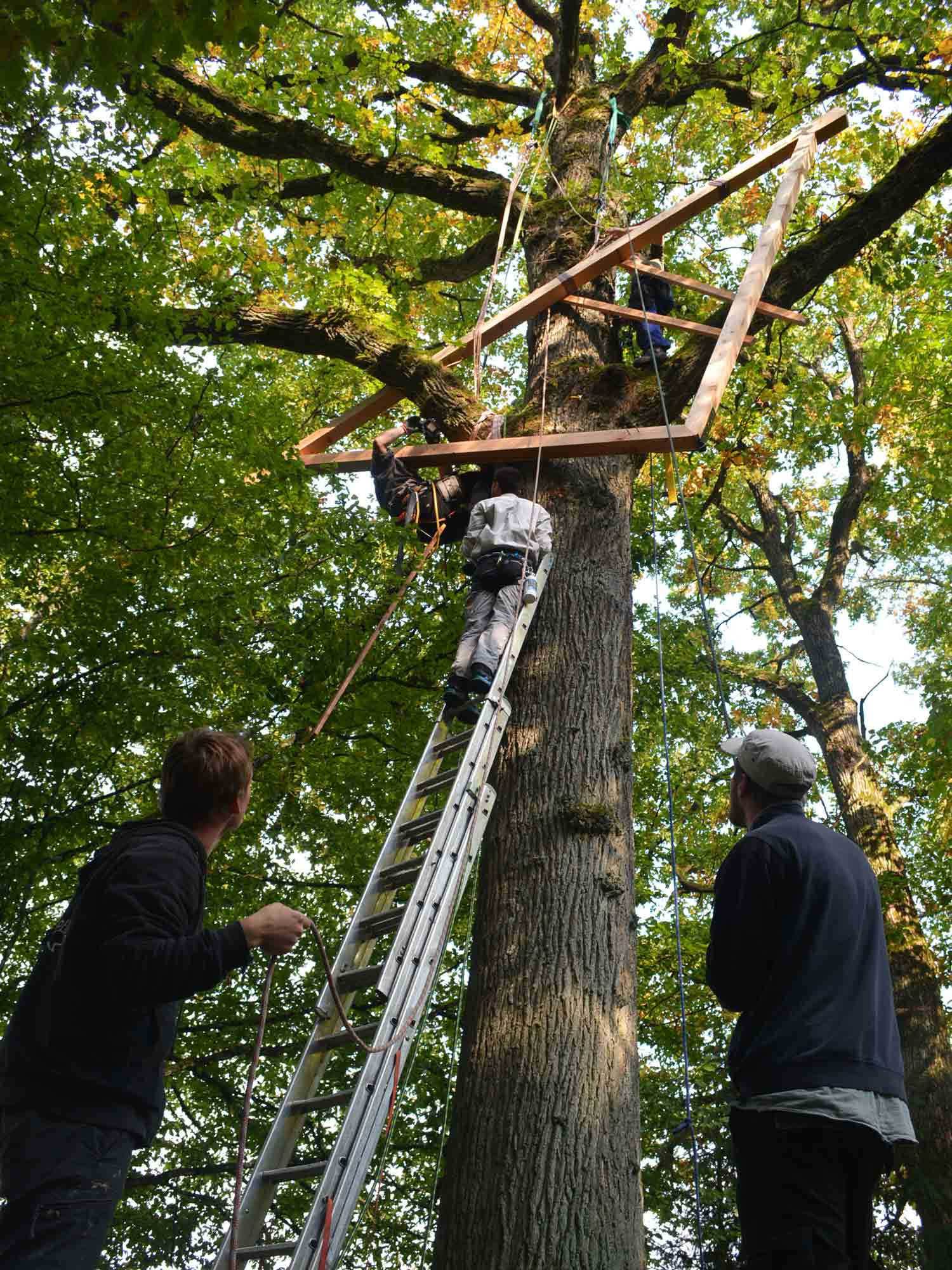 mounting-a-treehouse-platform-construction-with-pulley-baumbaron