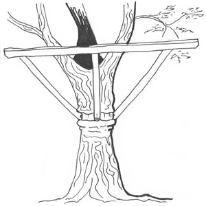 How to fix a treehouse correctly
