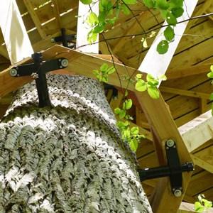 wie baue ich ein Baumhaus ohne dem Baum zu schaden richtige Schrauben