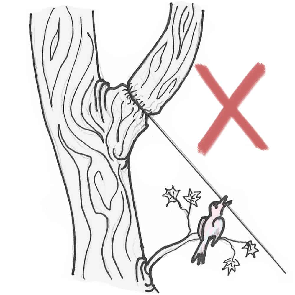 no gos do not strap a simple steel rope around a tree