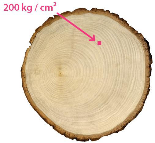 orientation-value-bearing-capacity-living-tree-house