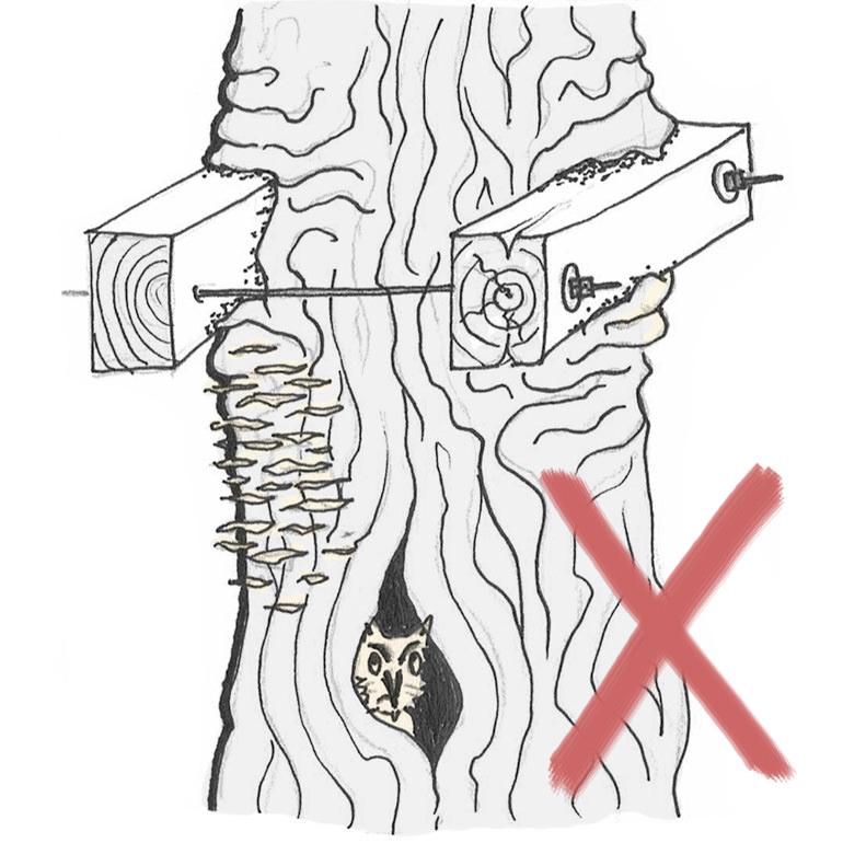 Baum Schaden durch Zangenbefestigung Holzbalken