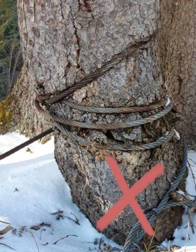 Baum abgeschnürt durch Stahlseil