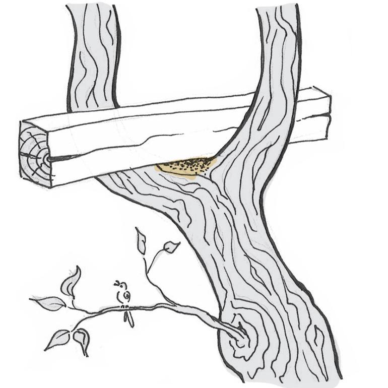 Holzbalken auf Astgabel auflegen Baumhaus bauen