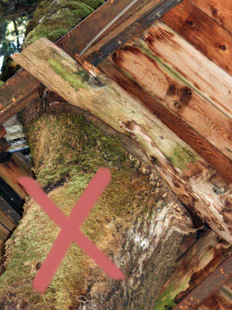 Holzbalken an Baum befestigen Schaden altes Baumhaus