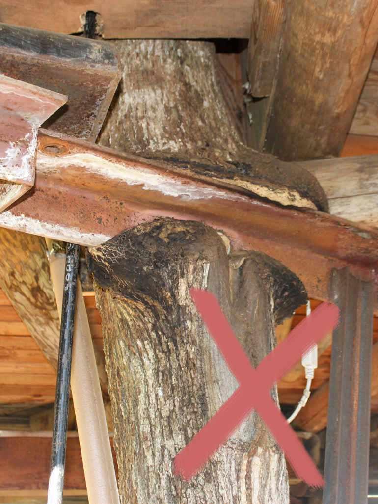 Stahlträger direkt an Baum befestigen Schaden