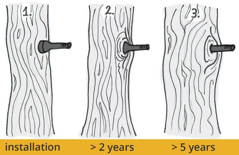 Baum wächst um Stahl Schraube Bolzen Gewindestange