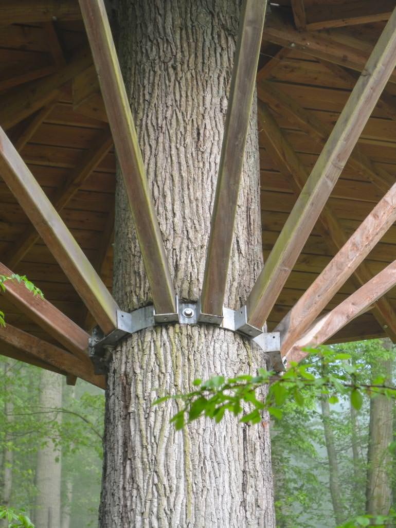 Baumhaus Bauen Fehler Befestigung mit Stahlgurt