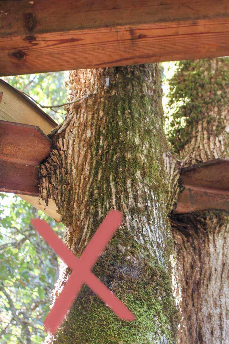 Stahlträger von Baum überwallt altes Baumhaus
