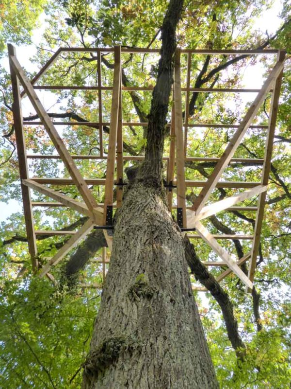 Large tree platform anchored with screws