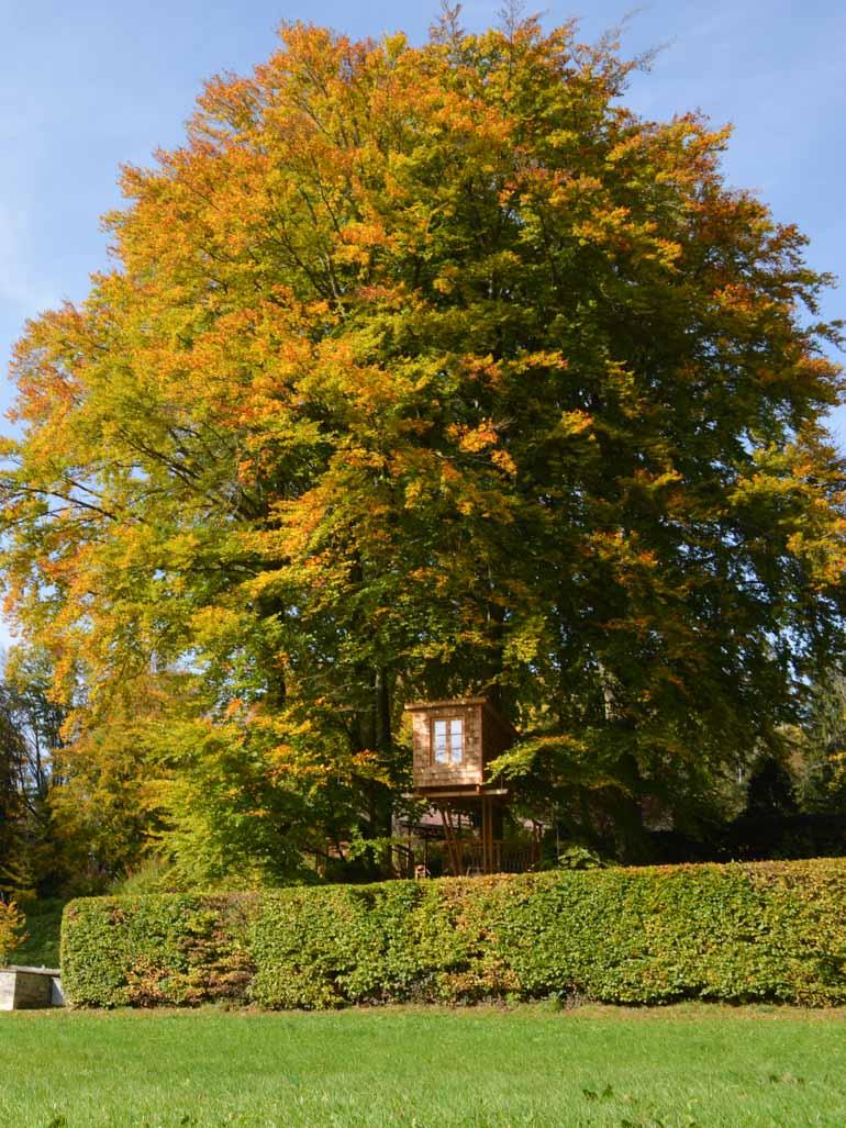hidden tree house in beautiful tree autumn