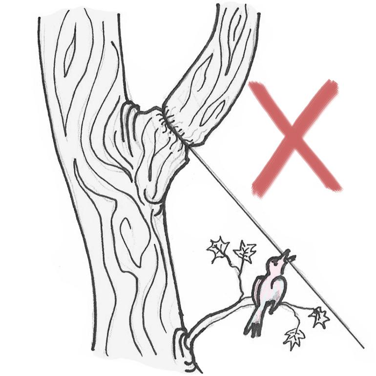 Stahlseil falsch an Baum befestigt
