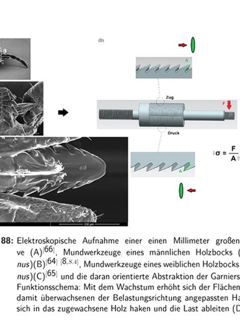 Test und Forschung an Baumhausschrauben Bachelorarbeit Bionics